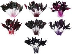 Kakas toll - 20 db/csomag Virág, toll, növény